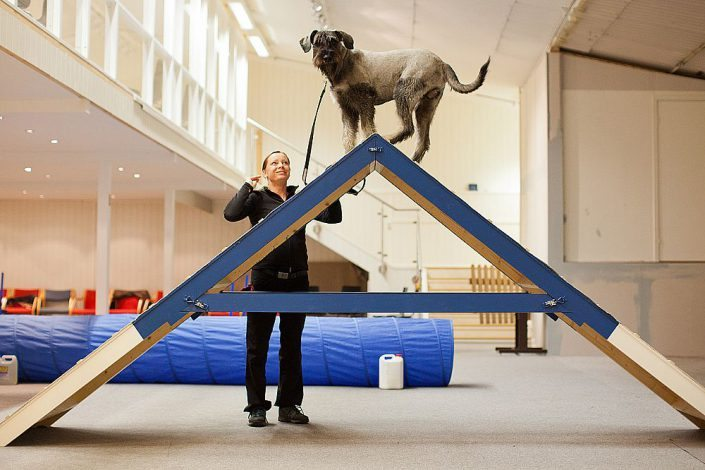 Agility kurs hos På Plass Hundeskole